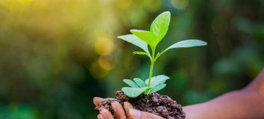 Dicas para manter a sua empresa de uma maneira ecologicamente sustentável